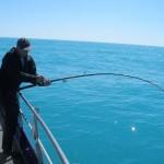 fiskeri-gule-rev